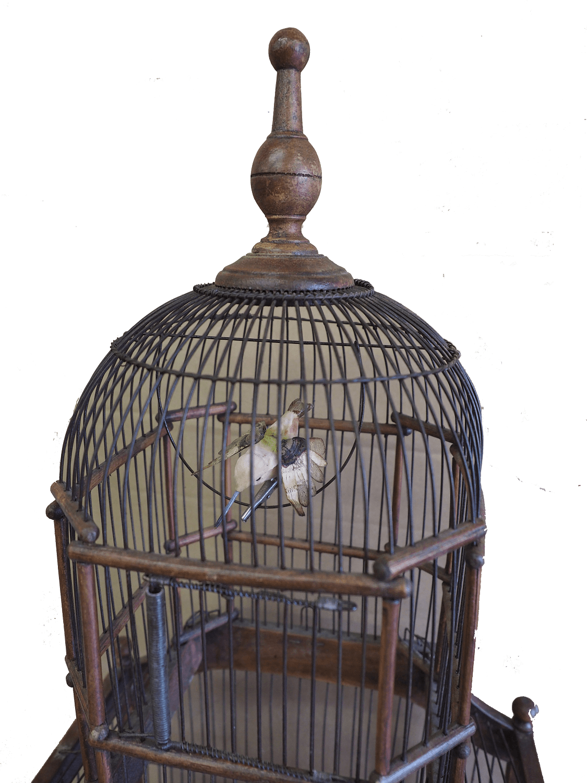 19th Century Victorian Cupola Bird Cage